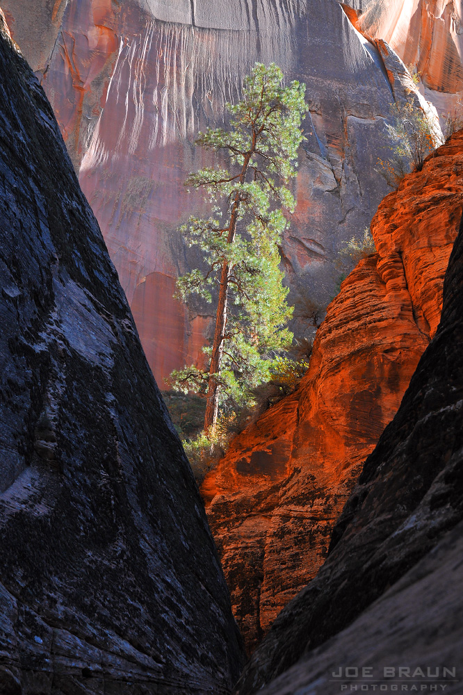 East Rim Trail photo (Zion National Park) -- © 2008 Joe Braun Photography